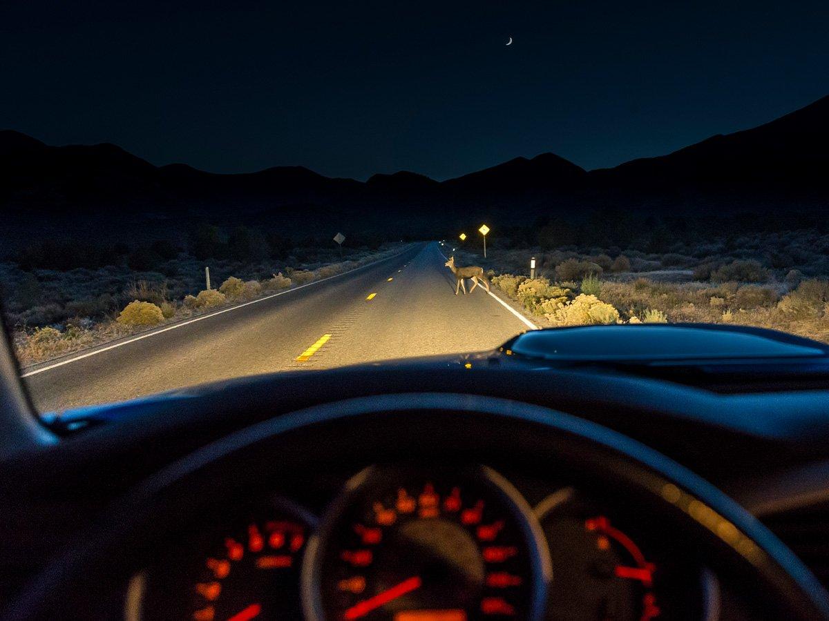 Autoschade Door Wild